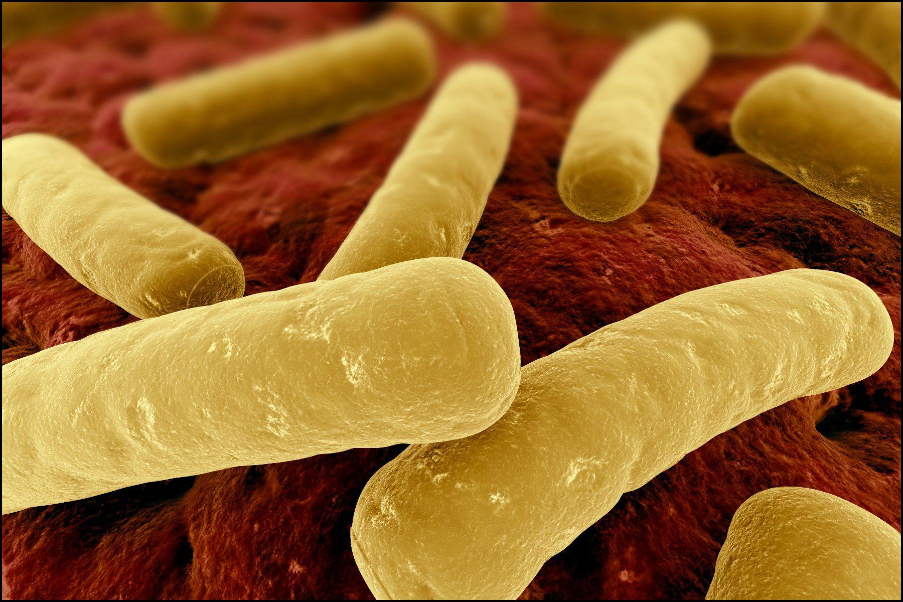 Анаэробные инфекции в урологии